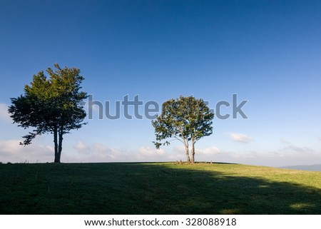 Solitaire trees against blue sky and green meadow - stock photo
