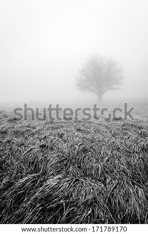 solitary and lonely tree with fog in black and white - stock photo