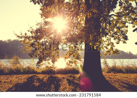 Solitary Oak Tree in Fall with a retro vintage instagram filter effect - stock photo