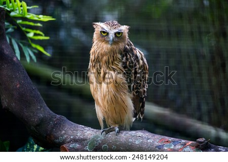 solitary owl perched on tree branch - stock photo
