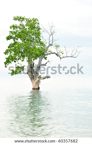 Solitary tree flooded on sea water. - stock photo