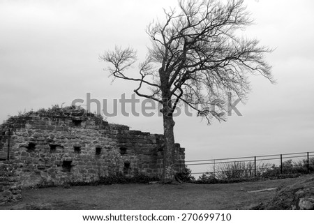 Solitary tree growing by an old stone castle wall, Germany.