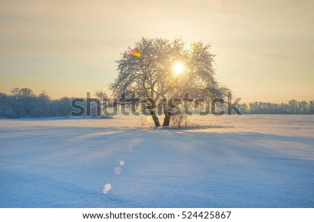 solitary tree in a field covered with snow on the background of a winter forest and sky, winter background