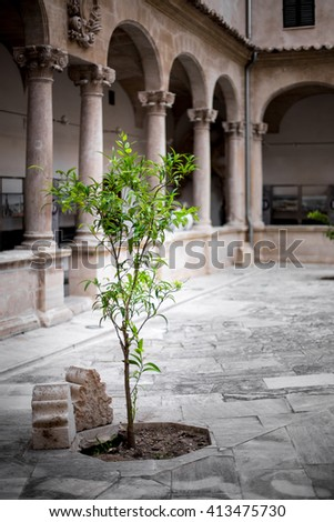 Solitary tree in a historic courtyard at Palma Cathedral, Mallorca, Spain