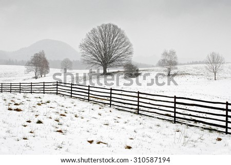 Solitary tree in winter, snowy landscape with snow and fog, foggy forest in the backgroud - stock photo
