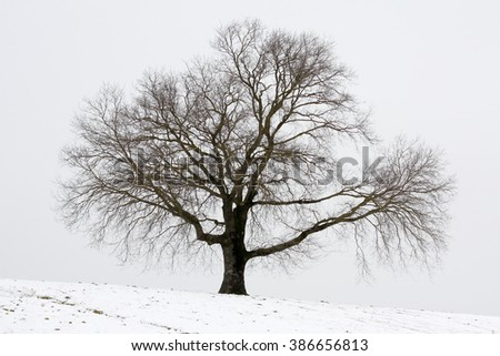 Solitary tree on the hill in winter