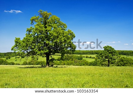 Solitary trees in meadow in clear-sky day in Czech republic. The Carpathian Mountains. - stock photo