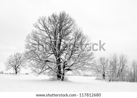 solitary trees in winter landscape - stock photo