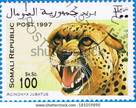 SOMALIA - CIRCA 1997: A stamp printed in Somalia shows a Cheetah (Acinonyx jubatus), circa 1997 - stock photo