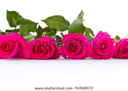 some beautiful roses red on a white background - stock photo