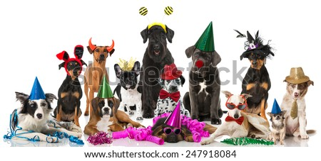 Some breed dogs with carnival costumes - stock photo
