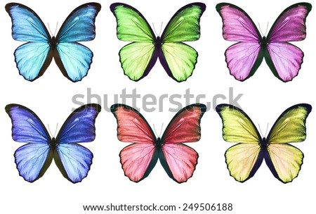 some colored  butterfly isolated on white. - stock photo