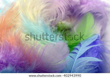 Some colored feathers for background or texture - stock photo
