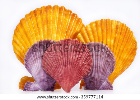 some colorful seashells of mollusk isolated on white background, close up.
