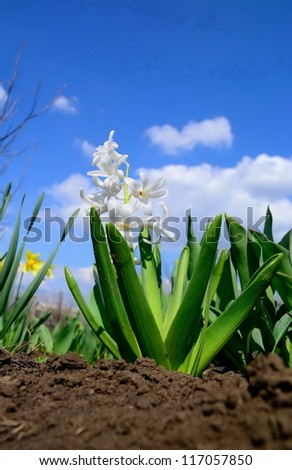 Some decorative flowers against the sky - stock photo