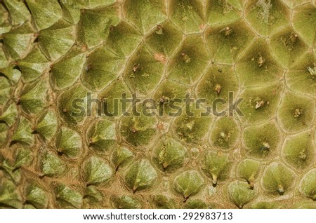 Some durian shell may differs from other durian shell by the spiny thorns, wild durian has much longer, sharper, slender thorns than cultivated species / Durian thorns / Abstract art from durian shell