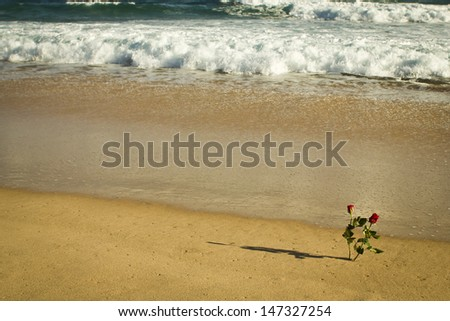 Some flowers in the shore of the sea.