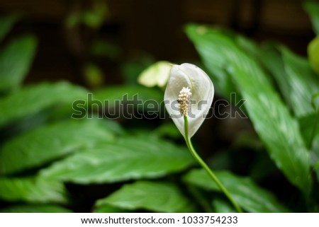 Some focus close texture white pollen stock photo download now some focus and close up the texture of white pollen of single or one white flower mightylinksfo