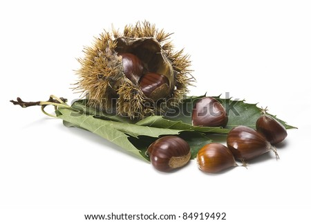 Some fresh chestnuts isolated over a white background.