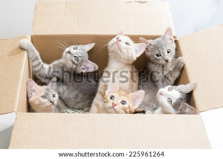 some funny little kittens sitting in a cardboard box and watching - stock photo