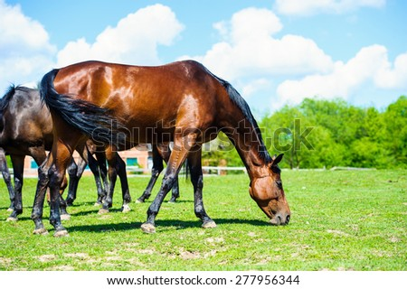 Some horses grazing on a meadow  - stock photo