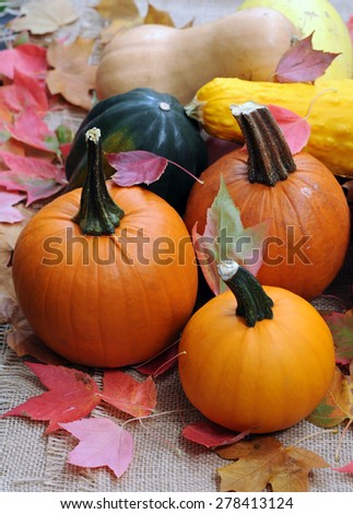 some kind of winter squash for Autumn season decoration - stock photo