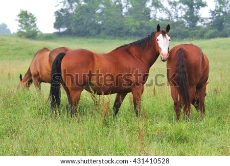 Some of the horses  of a large herd , in  a pasture on a lovely spring day.