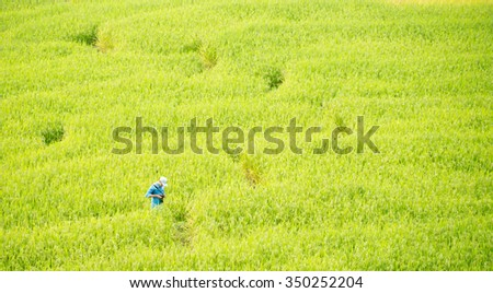 some one try to see something  in the rice field