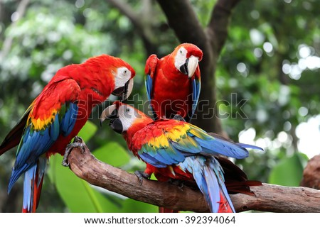 Some parrots playing - stock photo