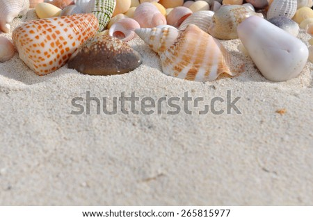 some pearly seashell in the sand