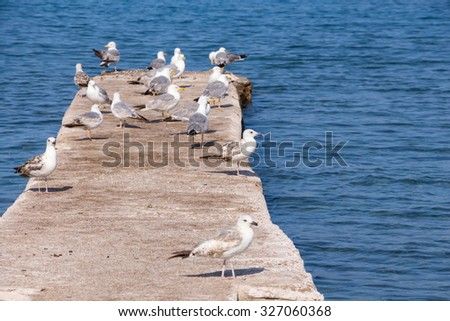 Some seagulls on concrete dock on the sea. - stock photo