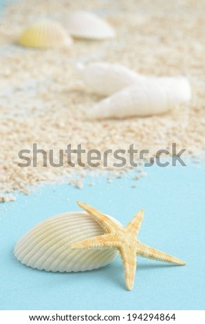 Some shells and a sea star on little gravel. - stock photo