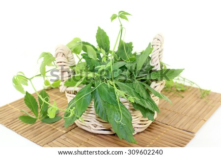some tendrils Jiaogulan on a light background - stock photo