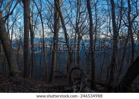 some trees in front of a cold mountain sunset - stock photo
