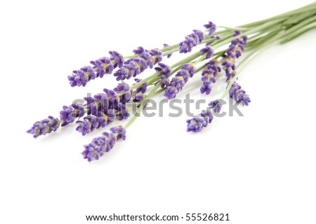 some twigs plucked lavender over white background