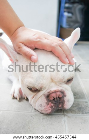 Someone's groping a dog, French bulldog
