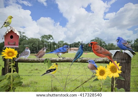 Songbirds Perched on a Country Fence - stock photo
