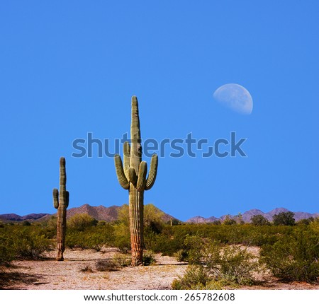 Sonora Desert Moon over the southwestern USA desert and mountains