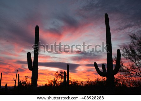 Sonoran Desert sunset with iconic Saguaro columnar cacti, Carnegiea gigantea, in Saguaro National Park, Arizona AZ, USA