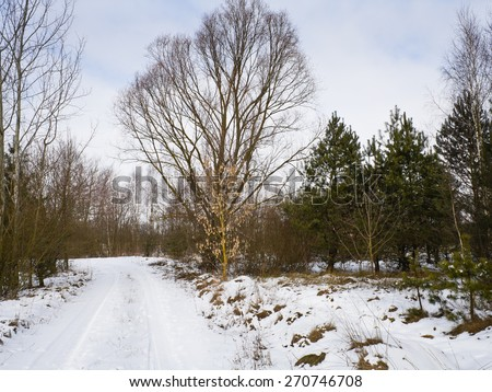 Soon the end of winter and the last snow melts - stock photo