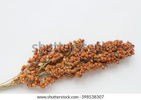Sorghum twig on the white background