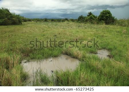 Soroti Wetlands / Swamps - Uganda - The Pearl of Africa - stock photo