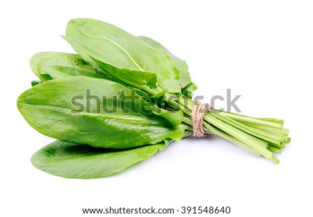 Sorrel herbal close up on white - stock photo