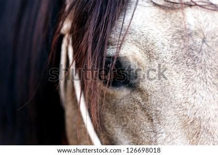 sorrel horse - stock photo