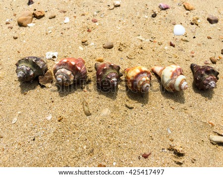 Sort Sea shells on sand. Summer beach background. Top view. art