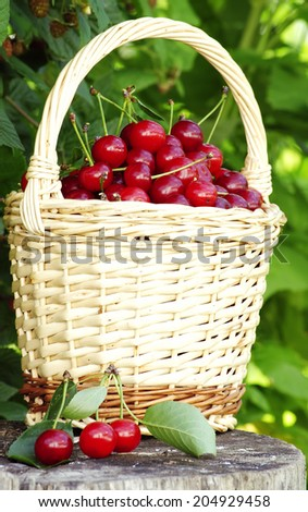sour cherries in basket ready to be eaten - stock photo