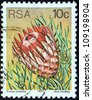 """SOUTH AFRICA - CIRCA 1977: A stamp printed in South Africa from the """"Succulents"""" issue shows  Protea aristata, circa 1977. - stock photo"""