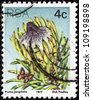 """SOUTH AFRICA - CIRCA 1977: A stamp printed in South Africa from the """"Succulents"""" issue shows Protea longifolia, circa 1977. - stock photo"""