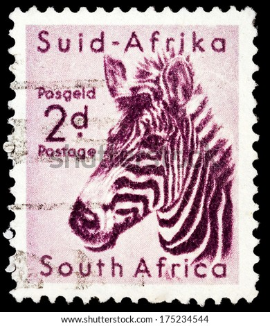 SOUTH AFRICA - CIRCA 1949: A stamp printed in South Africa shows image of a zebra, circa 1949  - stock photo