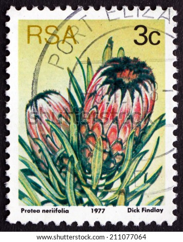 SOUTH AFRICA - CIRCA 1977: a stamp printed in South Africa shows Oleanderleaf Protea, Protea Neriifolia, Flowering Plant, circa 1977